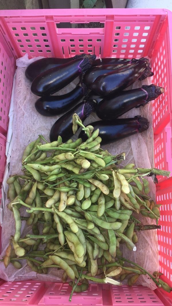 西端農園 夏野菜